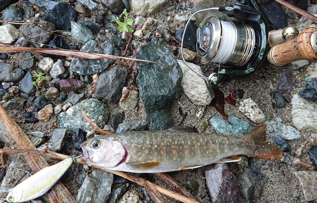 ルアーで釣れた岩魚