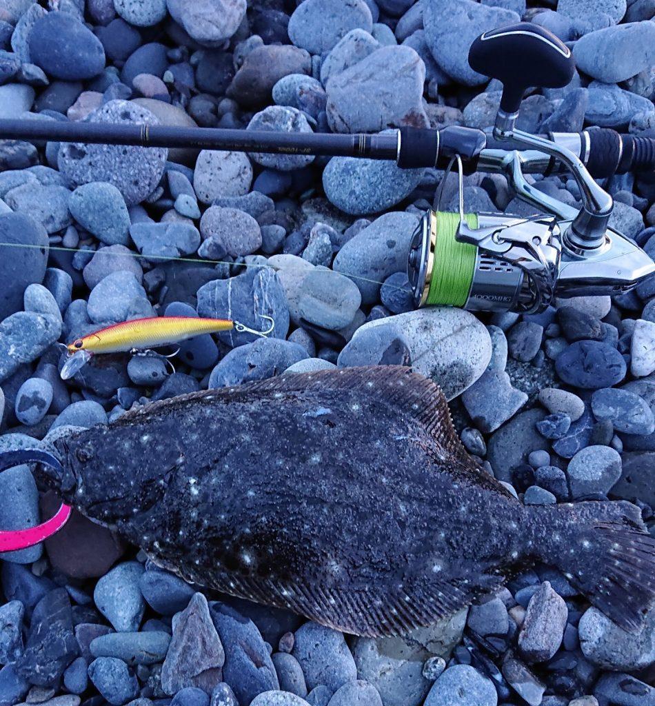 ソゲ(ヒラメの幼魚名)が釣れました
