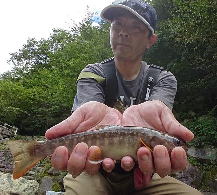 綺麗な魚体の岩魚